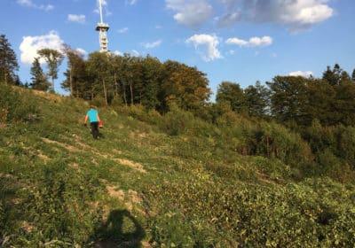 Wenholthausen klar für sichere Starts